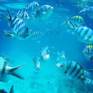 ギリ島 シュノーケリング 魚が沢山