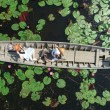 ล่องเรือชมบัวแดง ถ่ายรูปด้วยโดรน ที่ตลาดน้ำทุ่งบัวแดง 4