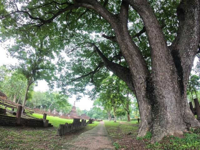 บรรยากาศภายในอุทยานประวัติศาสตร์กำแพงเพชร มีต้นไม้ใหญ่อยู่ด้านขวามือ และมีซากโบราณสถานเห็นอยู่ไกลๆ ทางด้านซ้ายมือ