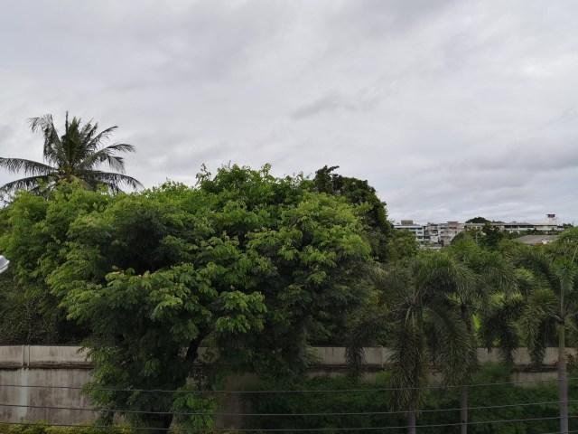 ภาพถ่ายต้นไม้และกำแพงหมู่บ้าน ถ่ายด้วย Huawei MatePad Pro 5G