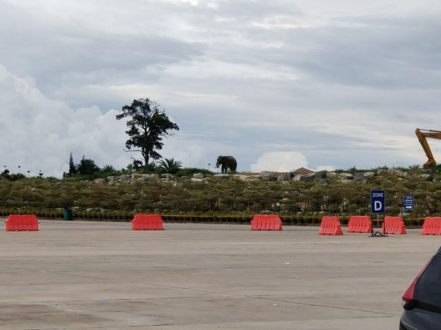 ภาพถ่ายด้วย Hybrid zoom 5x เห็นช้างชัดเจนขึ้น ช้างยืนอยู่ใกล้ต้นไม้