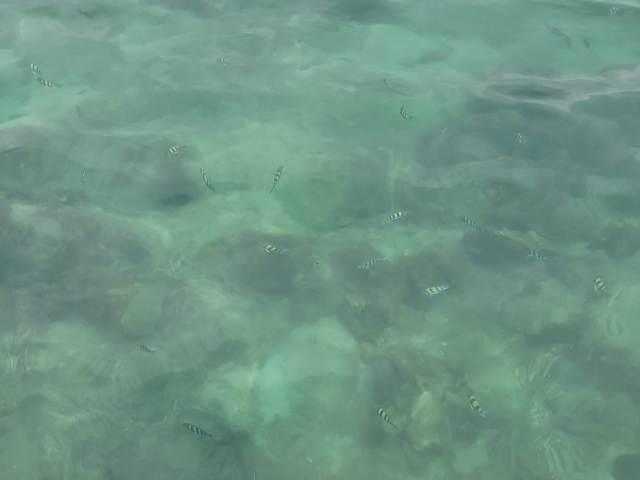 น้ำทะเลของเกาะห้องใสมาก เห็นปลาลายเสือว่ายน้ำไปมา