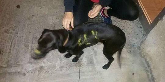 Σε καλά χέρια πλέον η σκυλίτσα στην Μεγαλόπολη