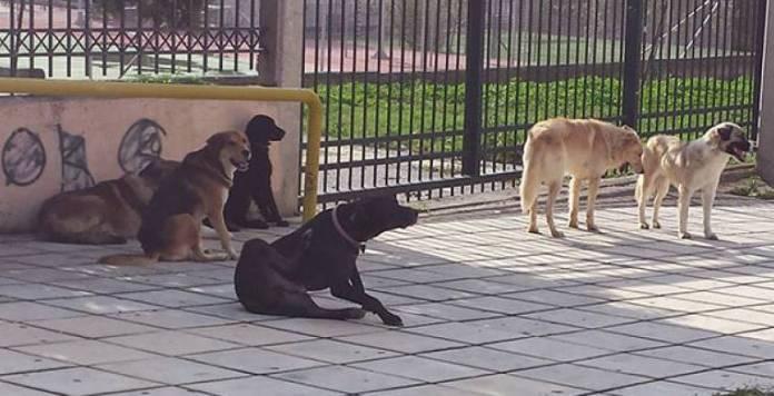 Αδέσποτα ζώα και προβλήματα στην Μεγαλόπολη