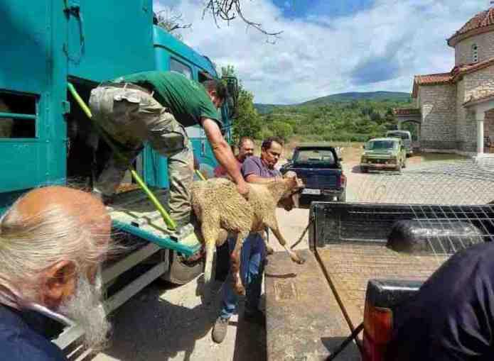 Αιγοπρόβατα σε κτηνοτρόφους της Γορτυνίας από την Μητρόπολη Γόρτυνος Και Μεγαλοπόλεως