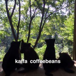 kaffa coffeebeans
