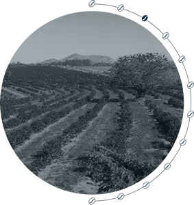 Die Kaffee-Farm 3