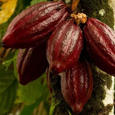Wird der Kakao langsam knapp?