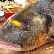 Sunday Fish Head 2