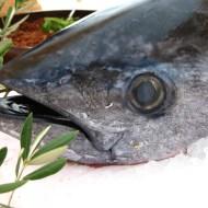 Sunday Fish Head