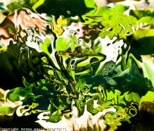 Abstract Green Fantasy by Bruno Paolo Benedetti. (Website link embedded within.)