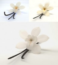 Vanilla flower. Source: visualphotos.com