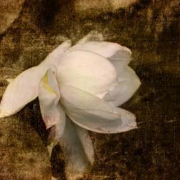 """Love Letter Viii"" by Jai Johnson on Fine Art America. (Website link embedded within.)"