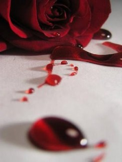 """Blood Rose"" by Draqulyn. Source: deviantart.com (website link embedded within.)"