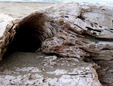 Driftwood on a beach. Photo: my own.