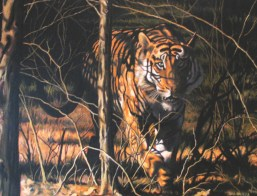 """Stalking Tiger"" by John Haukka at johnhaukka.com"