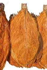 Dried tobacco leaves via 123rf.com