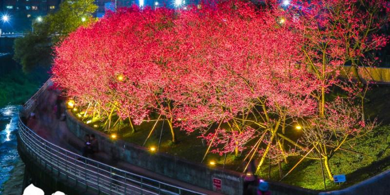 【台北景點】內湖樂活公園夜櫻季 城市裡也能賞櫻浪漫櫻花步道就在捷運東湖站
