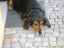 Prag2010 SDC11588
