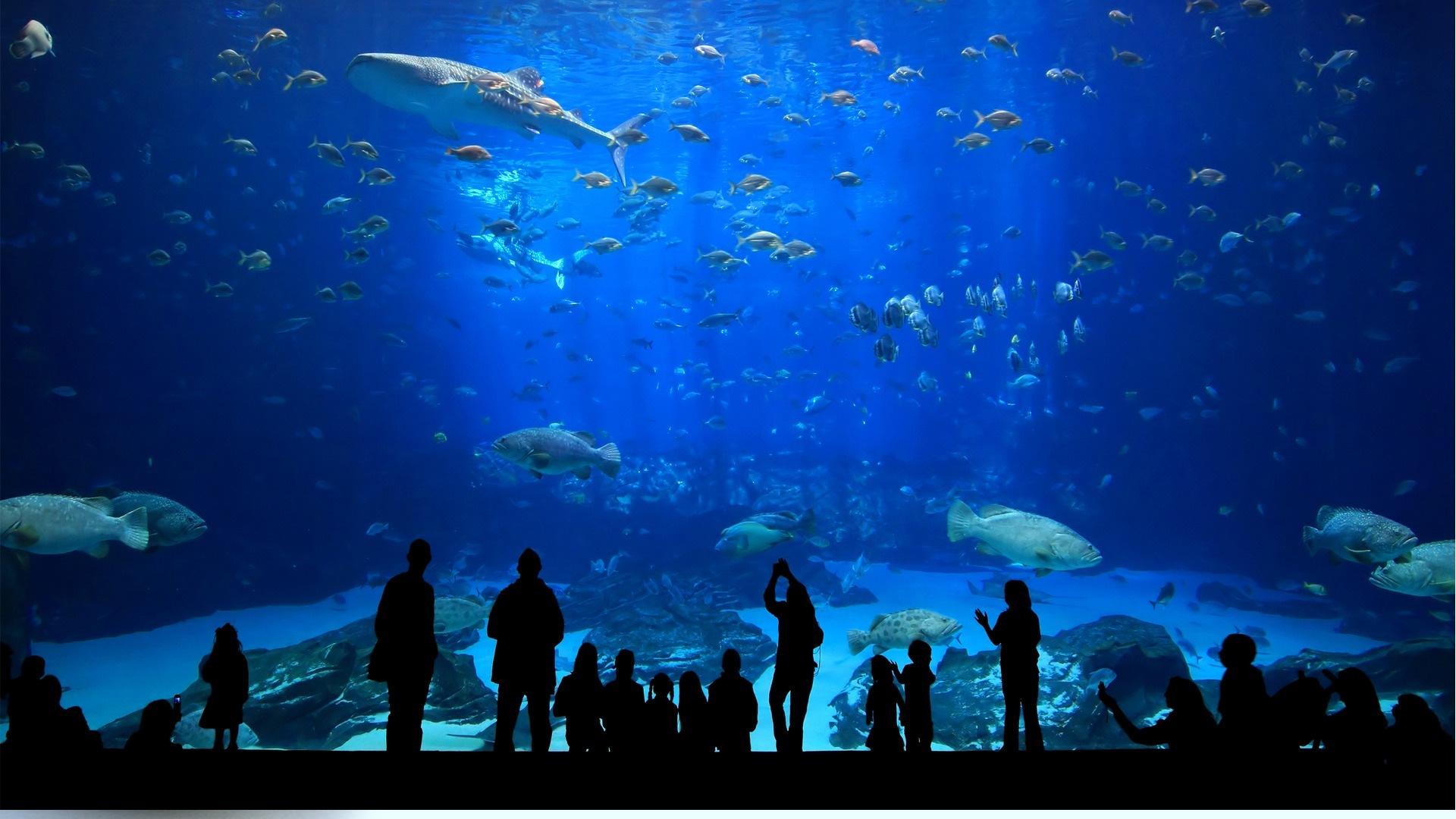 istanbul aquarium kaftan hotel