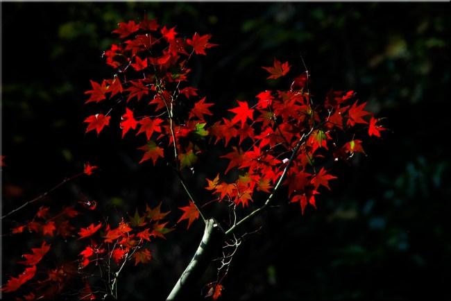 leaves2k