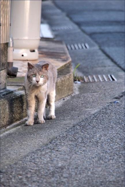 cat5c