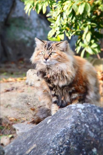 cat7a