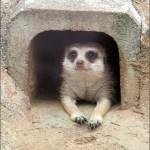 動物園へ行こう!Part.7