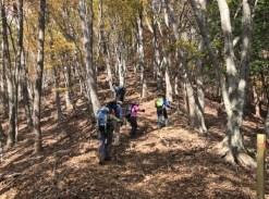 落葉の明るい林の中を登る