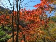 下山路途中の紅葉