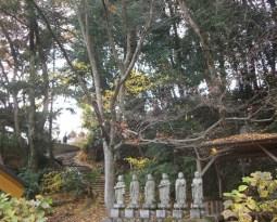 少林寺の境内にて秋の紅葉風景
