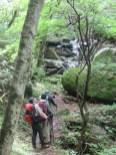 苔の奇岩と老木