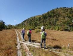 田代山湿原の木道