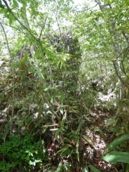 笹薮の部分は踏み跡も見ずらい