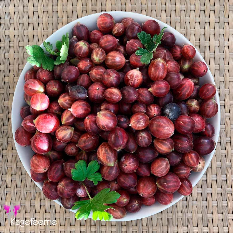 Nyplukkede stikkelsbær i skål