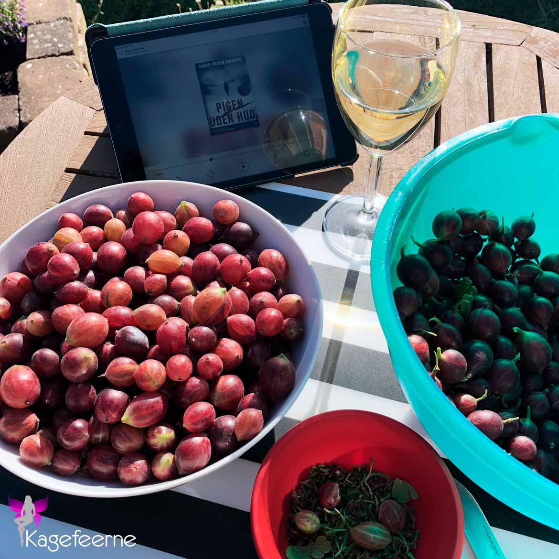 Stikkelsbær klargøring