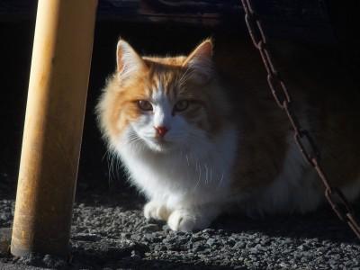 大人のネコは貫禄がある。
