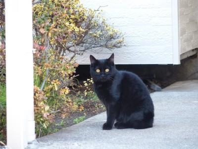 子どものネコはこの通りである。