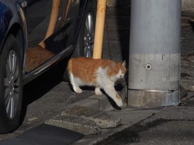 大人のネコは行動にも緊張感が感じられる。