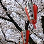 上野でお花見