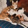 中野の猫ものがたり01 「ピピとチュピ」