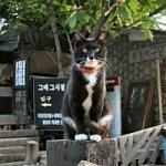 南怡島の動物たち