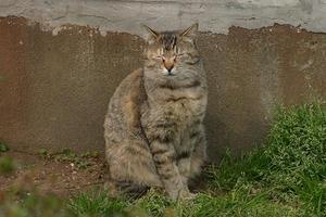不忍池のネコども2