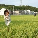 和歌山の田んぼにて