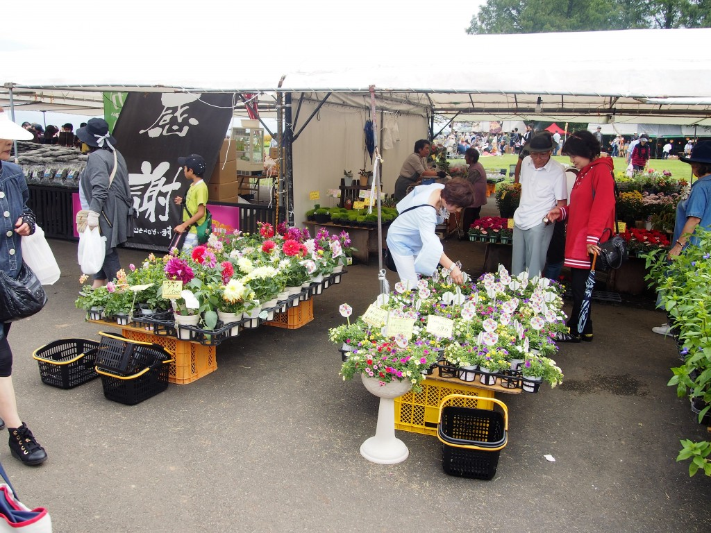 flowers sold at cosmos festival