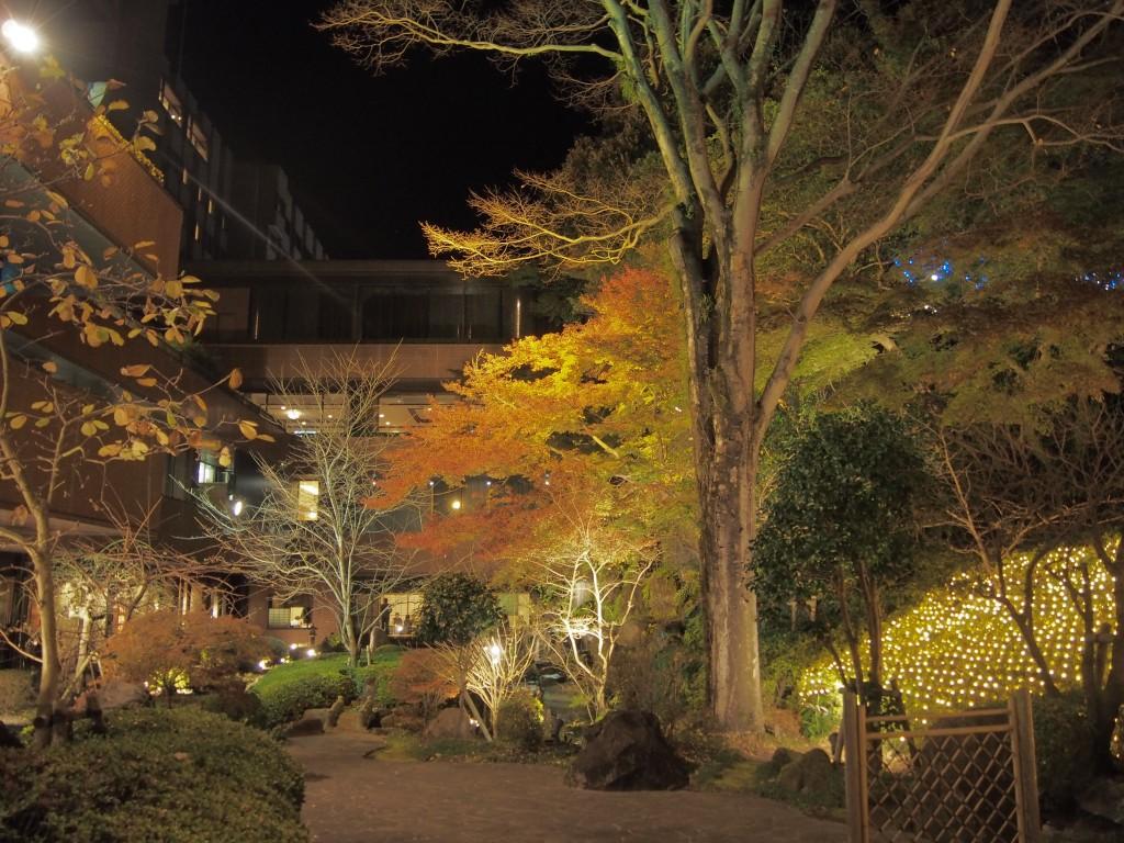 ライトアップされた紅葉@城山観光ホテルのイルミネーション