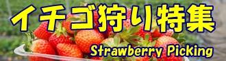 イチゴ狩り特集バナー
