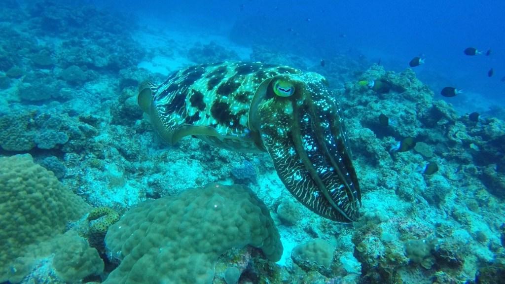 diving,kerama,keramablue,olinawa