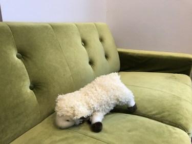 変幻自在!「緑色」のソファには何色のラグを合わせる?