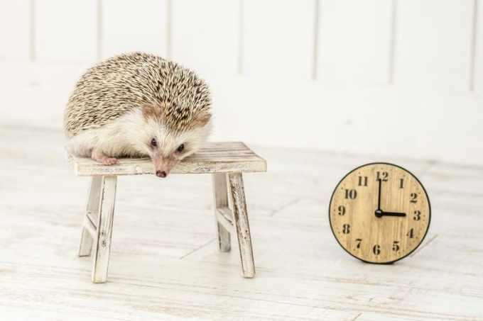 LOWYAの時間帯指定不可商品